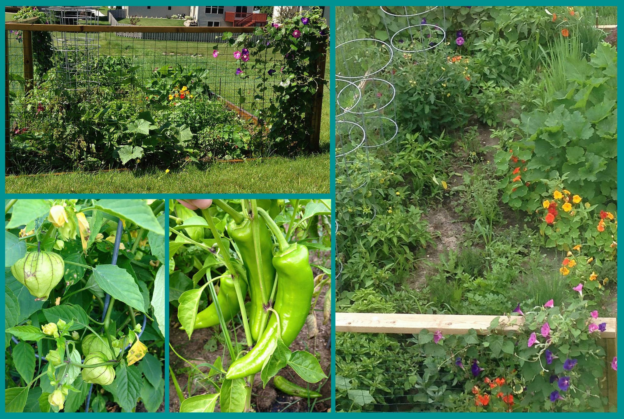 vegetable garden collage