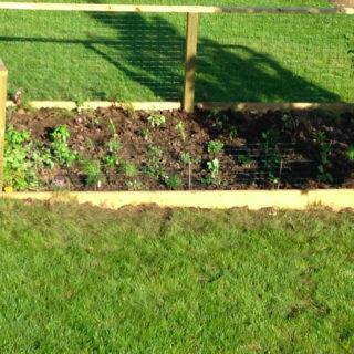 Homegrown Harvest? Our raised veggie garden