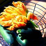 squash blossom orzotto